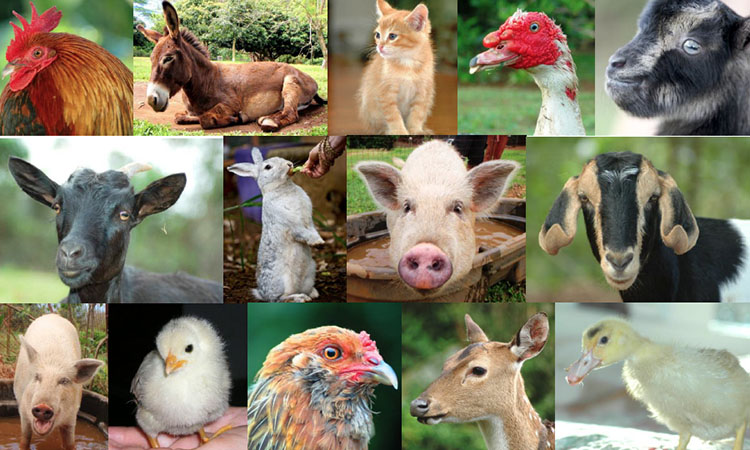 Real farm animals together - photo#2